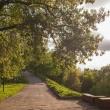 В Нижнем Новгороде появилась Дирекция по развитию парков и скверов